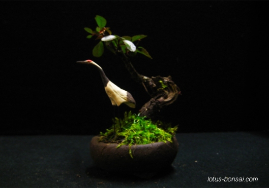 Lotus-Bonsai-figurines-9