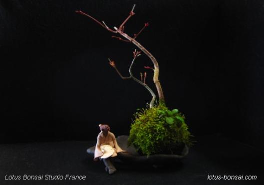 lotus bonsai kokedama