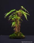 kokedama-ateliers-workshop-bonsai-penjing