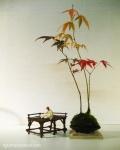 kokedama-palmatum-erables-4