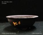 pot-bonsai-mame-no-103Feb13-3