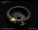 pot-bonsai-mame-no-148Feb13-1