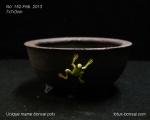 pot-bonsai-mame-no-152Feb13-1