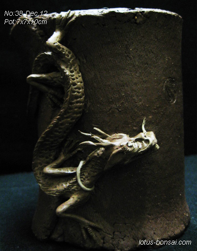 small dragon bonsai pot