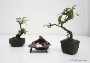 bonsai-mudman-3