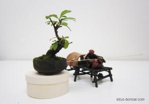 bonsai-mudman-5