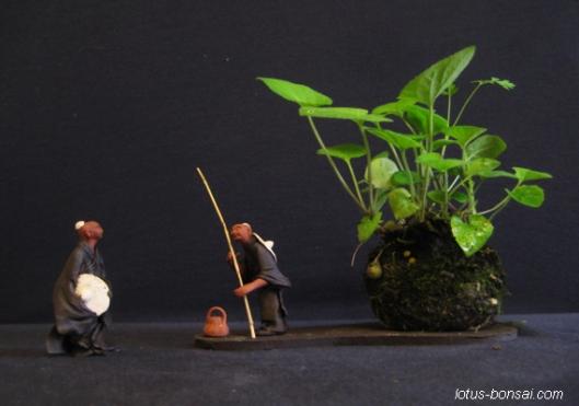 kokedma & mudman bonsai