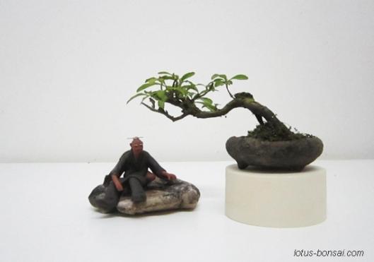 bonsai mudman