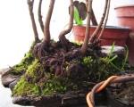 bonsai-roche-penjing-figurines