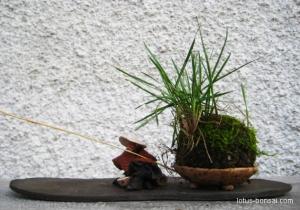 fisherman-bonsai-2