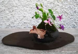 pensee-kokedama-bonsai