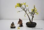 winter-jasmine-bonsai-1