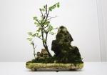 penjing-bonsai