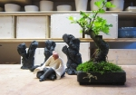 pot-mame-bonsai-lotus-studio-5