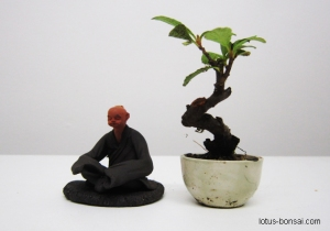 bonsai-figurine-mame-1