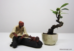 figurine-penjing-lotus-studio-4