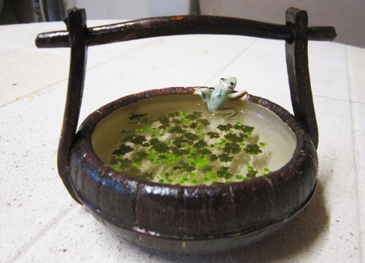 bonsai-pot-grenouille-plant-aquatique-lentille-eau
