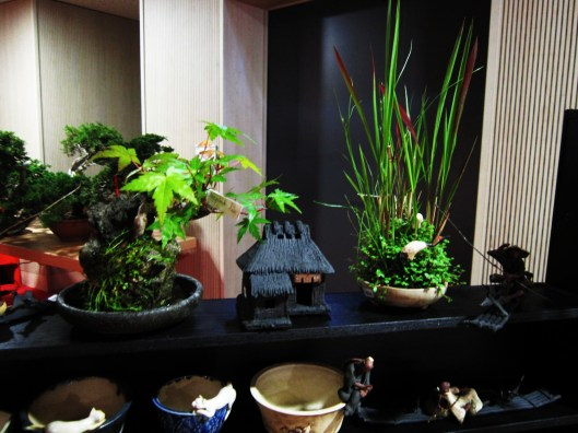 lotus bonsai expo mulhouse