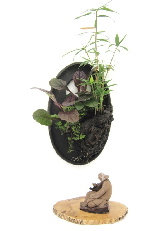 lotus bonsai penjing