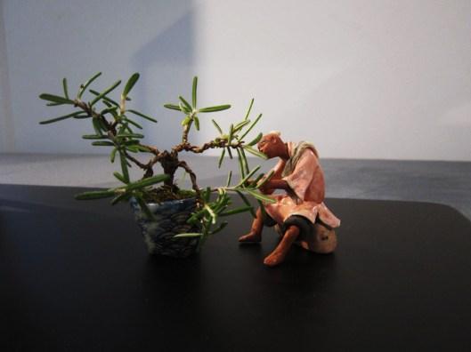 expo-national-bonsai-mame