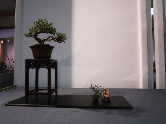 expo-nationale-mame-shohin-bonsai-2016