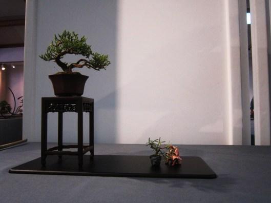 expo-nationale-mame-shohin-bonsai-2016
