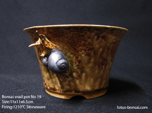 bonsai-snail-pot-no19