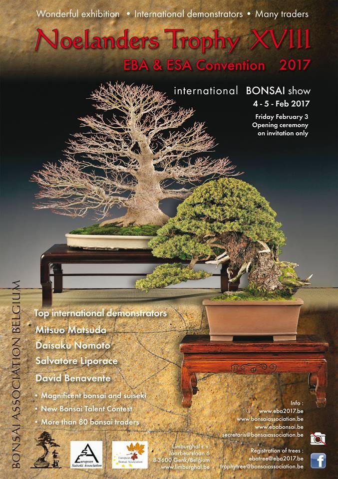 lotu-bonsai-noelanders