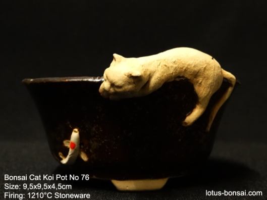 bonsai-cat-koi--pot-No-7