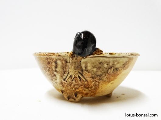 bonsai-snail-pots