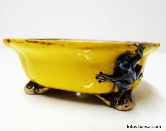 bonsai-frog-pot