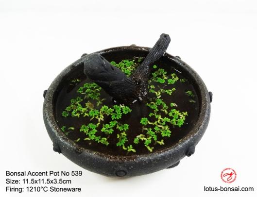 Bonsai-Pot-No-539d